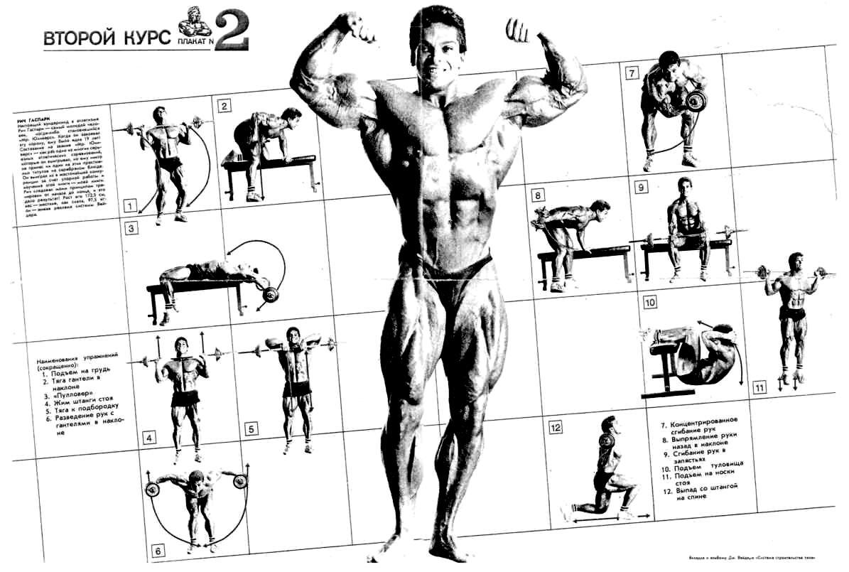 Система строительства тела плакат
